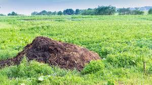 homemade organic fertilizer