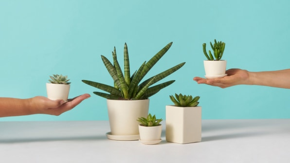 Tips to Sell Plants Online